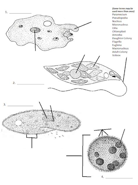 section 20 3 plantlike protists section 20 3 plantlike protists 28 images image