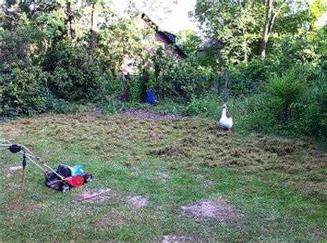 Vertrockneten Rasen Retten by Rasen Richtig Vertikutieren Anleitung Jobruf
