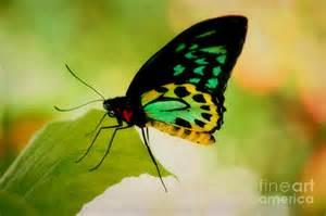 Rainbow Shower Curtain Rainbow Butterfly Macro Photograph By Peggy Franz