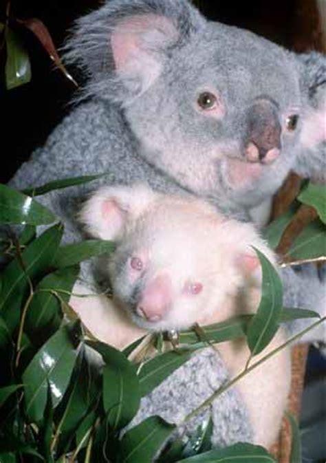 albino animals animal pictures  facts factzoocom