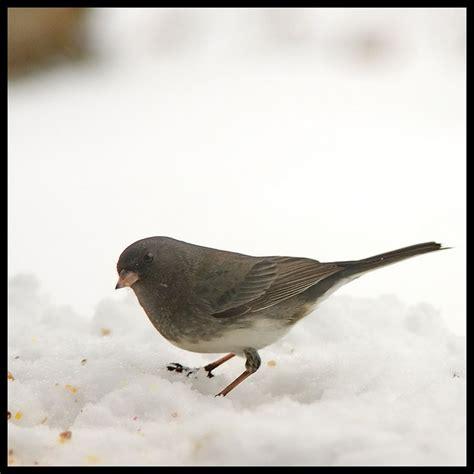 junko bird bird love pinterest
