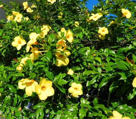jenis tanaman bunga   mudah perawatannya