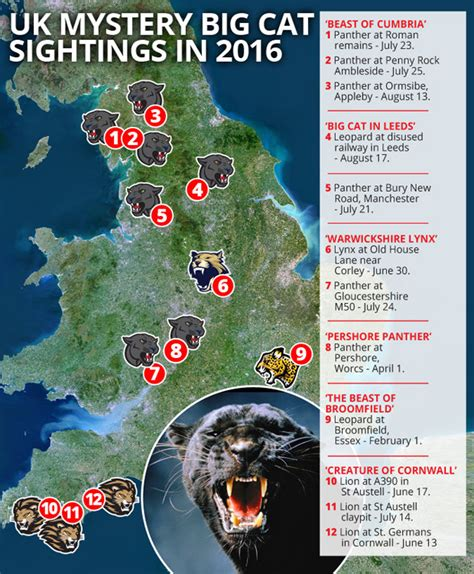 britisch wohnen big cat sightings mapped are lions and panther
