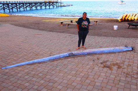 Low Cost Tiny Homes 18 foot long quot sea serpent quot discovered off california coast