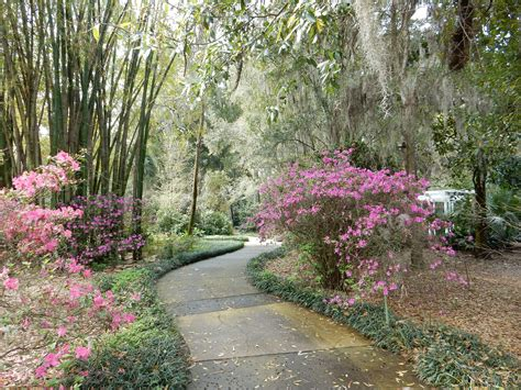 Leu Botanical Gardens Harry Leu Gardens Orlando Fl Chris And Ed Travel Adventure
