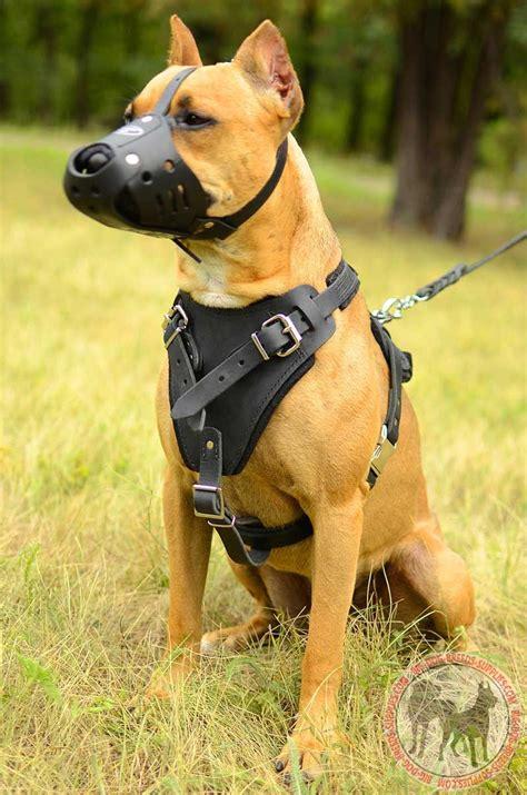 muzzle for pitbull anti bark leather pitbull muzzle walking