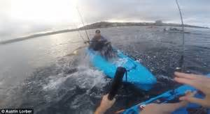 man drags shark behind boat fisherman catches shark after it bit friend s kayak off
