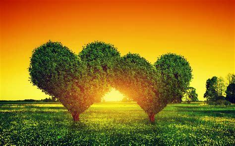 imagenes jpg para html fondo de pantalla arboles corazones hd