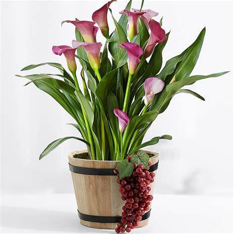 cuidado plantas interior plantas de interior con flor para decorar