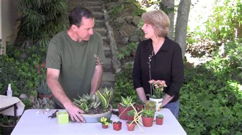 How To Garden Make A Low Light Succulent Dish Garden For Indoors