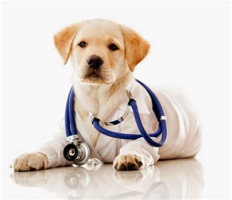 puppy health 17 best images about pet supplies on cats barking and itchy