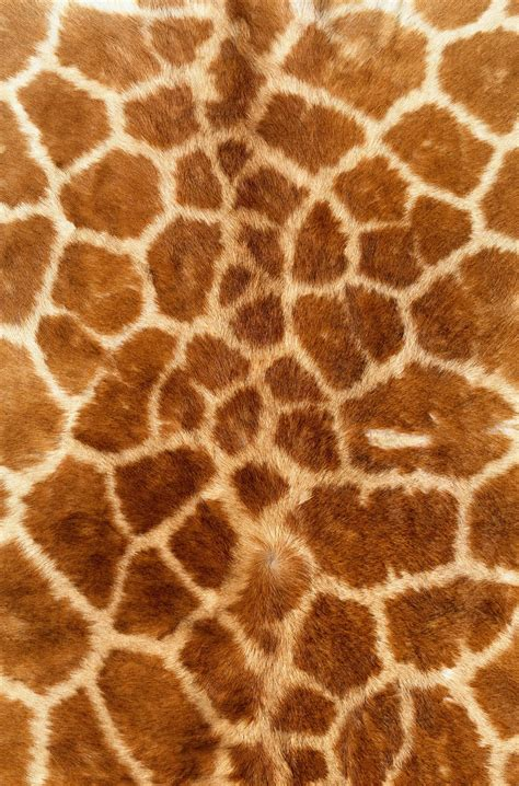pin texture skins backgrounds on мех skin giraffe texture fur fur texture background background illustration research