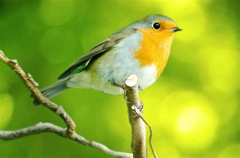 summer bird watching tips sweeney feeders
