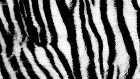 pattern tiger photoshop white tiger fur pattern