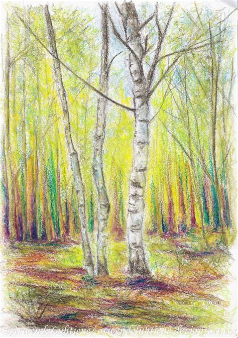 6 ft birch cluster tree birch trees of brethil by arwendeluhtiene on deviantart