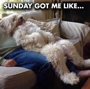 Sunday Meme - funny dog sunday memes jokes memes pictures