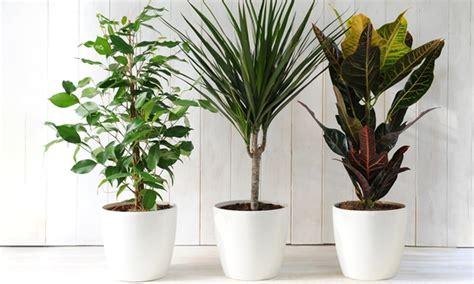 plants    alive  conscious