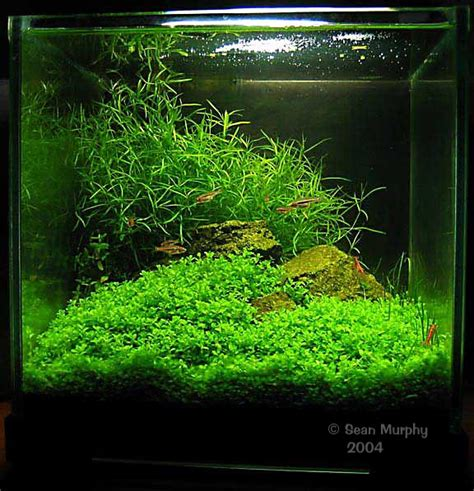Best Substrate For Aquascaping by 2007 East Aqua Nano Tank Aquascaping Contest