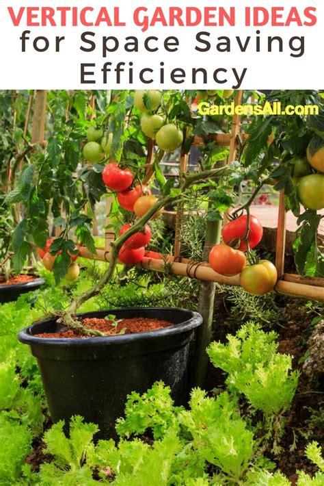 vertical tomato garden diy garden ftempo
