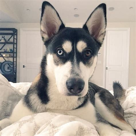 joey graceffa s dogs 17 best images about joeygraceffa on shane dawson youtubers and jet lag