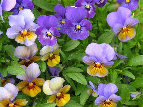 sfondi giardini sfondi giardini sfondo per il desktop immagini gratis