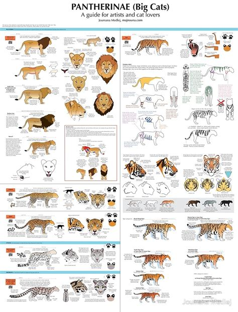 Metal Duduk Panther 2500cc Size 075 quot pantherinae big cats chart for artists quot by joumana