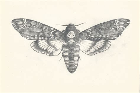 death s head hawk moth by ichiru san on deviantart