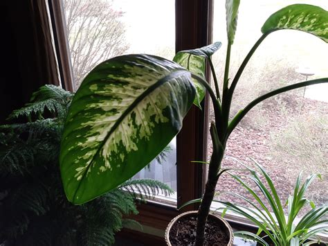 house plant identification image gallery identifying houseplants