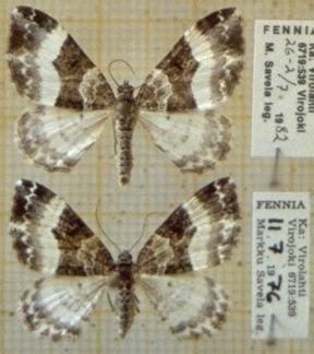 euphyia