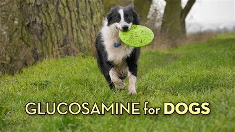 best glucosamine for dogs choosing the best glucosamine for dogs top 5 reviews