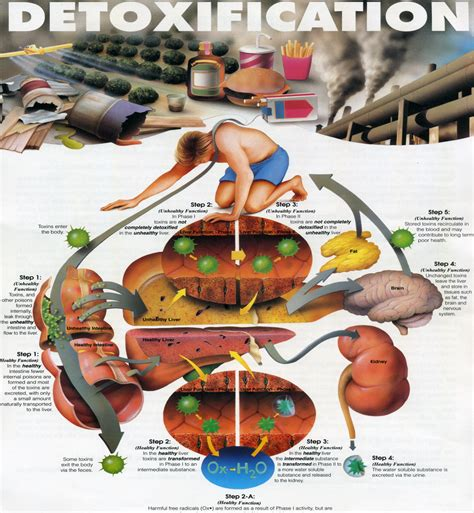 Can Detox Be Fatal by Complete Guide On Detoxification And It S Importance In