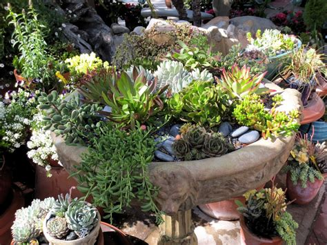 succulent planters for sale top 28 succulents in pots for sale for succulents for