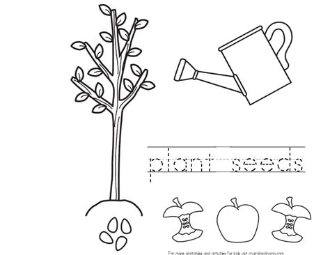 the seed growth colouring pages