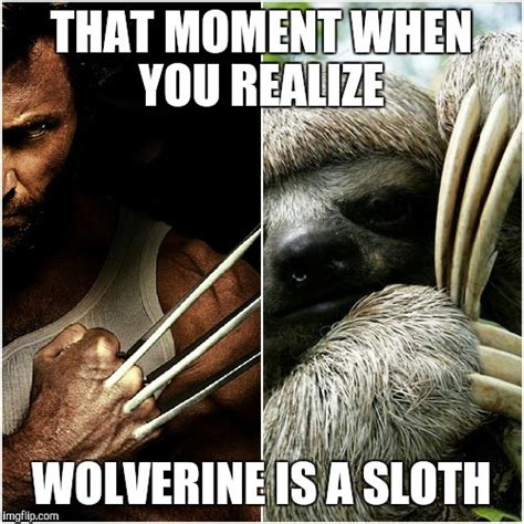 Wolverine Picture Meme - wolverine is a sloth imgflip