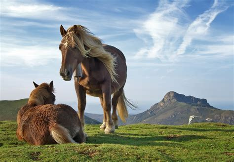 Landscape Pictures With Animals Animals Wildlife Mountain Grass Nature
