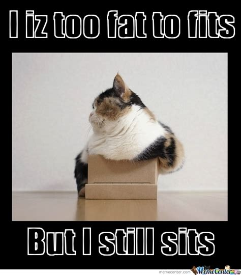 Fat Cat Meme - fat cat by unhealthy meme center