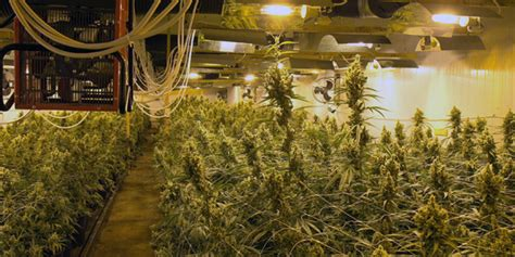 Indoor House Plants Sale create the best climate for marijuana grow room