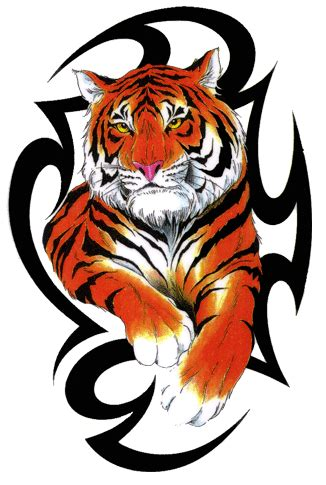 fire tiger tattoo designs tribal tiger tattoos gallery