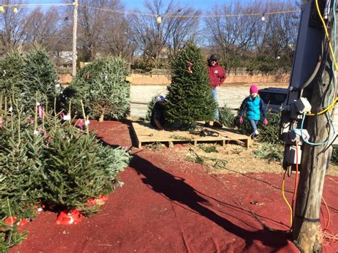 buy christmas tree cuttings cutting tree bryans trees greensboro