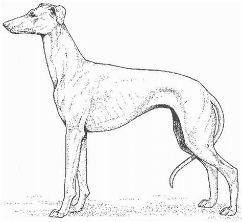 imagenes realistas para colorear dibujos de perros reales imagui