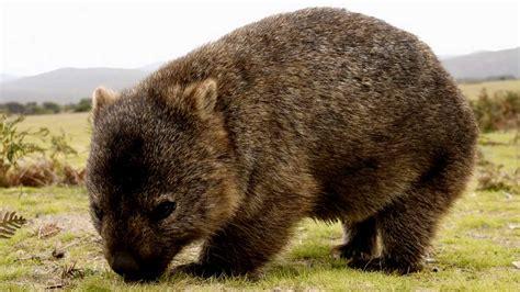 animals that start with a u inspec wallp animals animal that starts with w inspec wallp animals