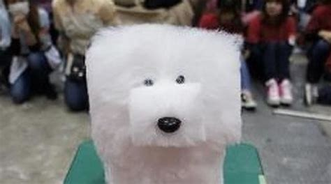 how are dogs considered puppies 15 pet hairstyles that should be considered animal abuse sesame memes
