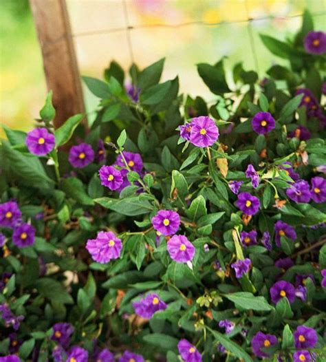 heat loving plants heat loving container garden plants