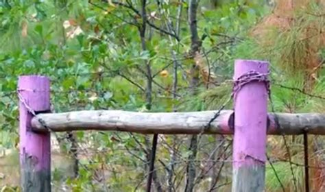 purple paint law a purple paint law senate backs bill to replace no