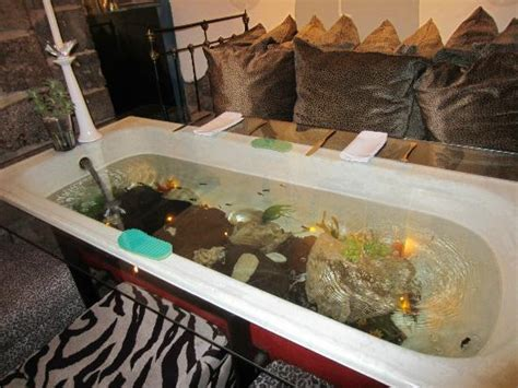 aquarium bathtub bathtub doubling as dining table and fish tank picture