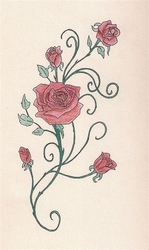 rose and vines tattoo vine vine pencil and in color vine