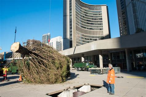 20131103 nathan phillips square christmas tree 4059 photo