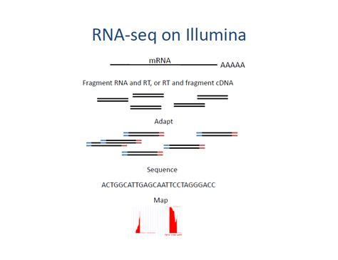 rna sequencing illumina rna sequencing on illumina