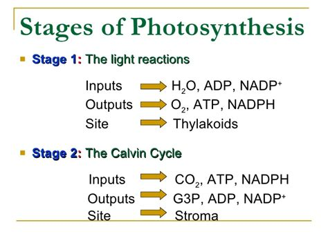 section 8 3 the reactions of photosynthesis answers chap 8 concept checks