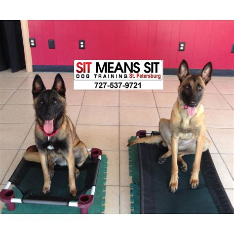 puppy obedience classes near me sit means sit st petersberg coupons near me in seminole 8coupons